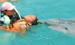 Inicia el martes terapia asistida con delfines