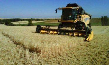 Potosinos producirán cebada de malta para Grupo Modelo