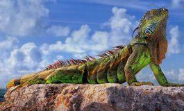 Reptiles: las primeras víctimas del calentamiento global