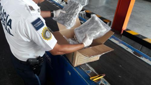 Policia Federal asegura en el aeropuerto hierba verde similar a la marihuana