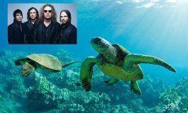 Maná salva tortugas marinas con línea de ropa