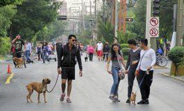 Sanciones a quien no recoja desechos de mascotas en vía pública: Ayuntamiento
