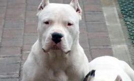 Mutilación de Animales Domésticos por Estética Debe Ser Delito: Orta Rodríguez