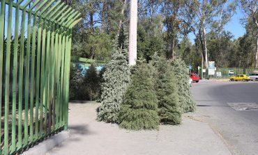Instala el Ayuntamiento seis centros de acopio para árboles navideños