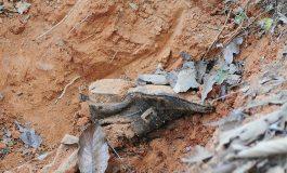 Inician exhumaciones de cuerpos sin identificar en Coahuila; son 458