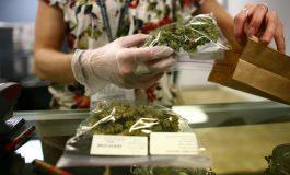 Luz verde a la marihuana medicinal