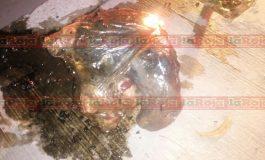 Falsa alarma, confunde bolsa de vísceras con restos humanos