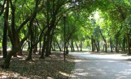 Localizan cadáver de bebé en Bosque de Chapultepec