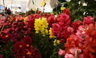 """Preparan la próxima tradicional """"Feria de las Flores"""" en la Ciudad"""