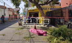 Hombre de la tercera edad muere podando un árbol