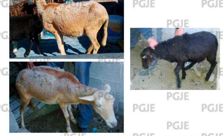 Localizan 5 animales robados en Charcas