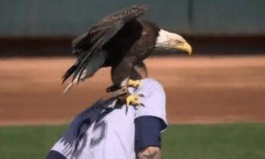 """Águila """"ataca"""" a beisbolista de las grandes ligas previo al juego"""