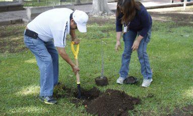 Ayuntamiento inicia la plantación de mil árboles en la Zona Industrial