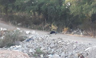 Enésimo ejecutado en el municipio de Matehuala