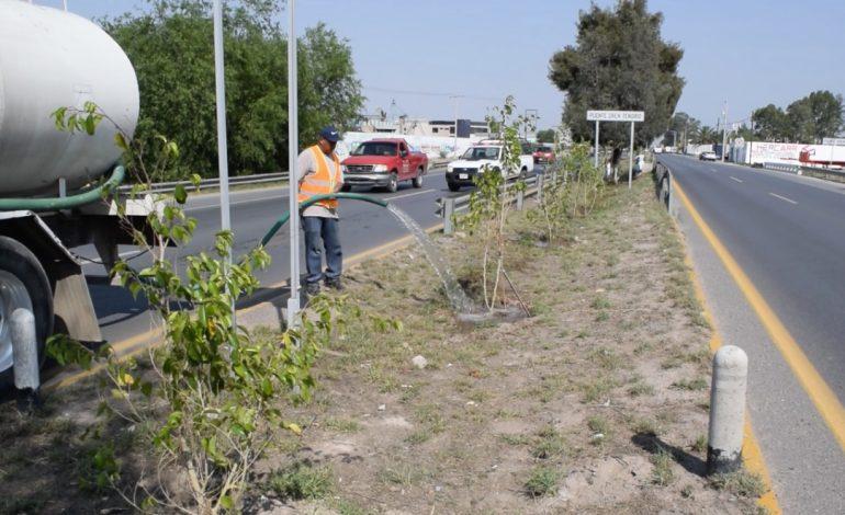 Implementan rehabilitación de camellón de carretera a Rioverde