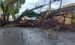 Caída de árbol ocasionó caos vial