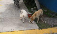 Rescatan a par de canes varados en SNM