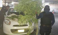 """Lo agarran drogándose y con """"plantotas"""" de mota en Prados"""