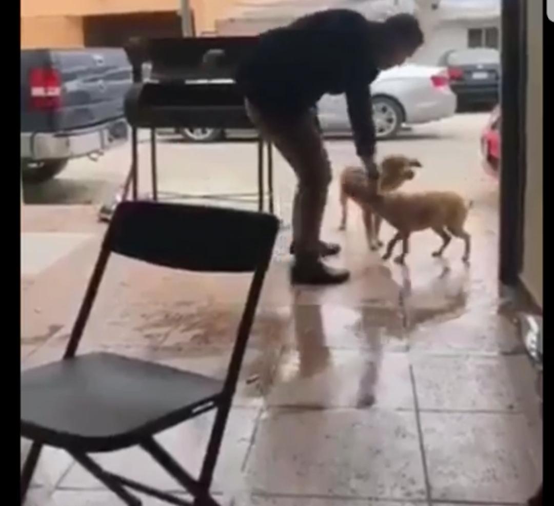 NUEVO CASO DE MALTRATO ANIMAL AHORA EN PIEDRAS NEGRAS COAHUILA