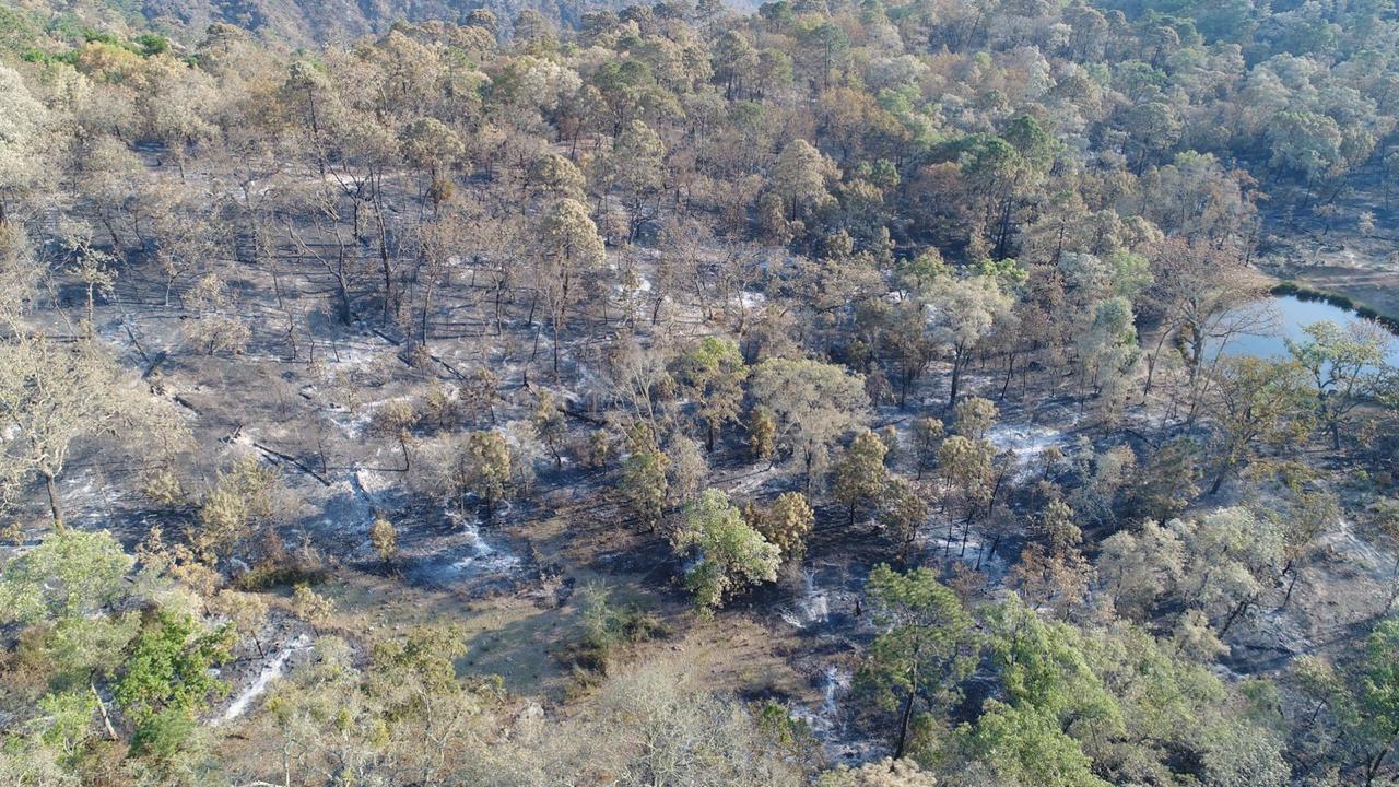 Luego de incendios, llaman a reforestar la Sierra de  San  Miguelito