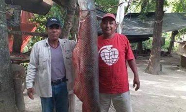 Enorme pejelagarto es capturado en el Río Moctezuma