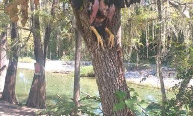 Sacrifican a gallina negra en Allende, según para brujería, la clavan en un árbol