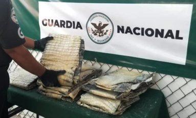 Guardia Nacional decomisa 9 piezas de piel de cocodrilo en Aeropuerto Ponciano Arriaga
