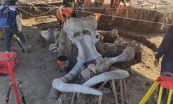 Localizan restos de más de 60 mamuts en el Aeropuerto de Santa Lucía